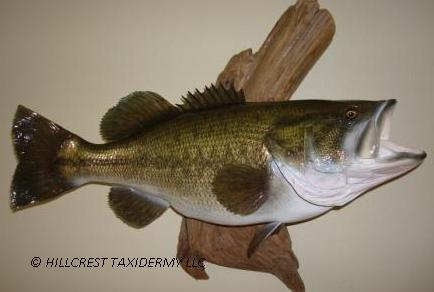 Large Mouth Bass Replica
