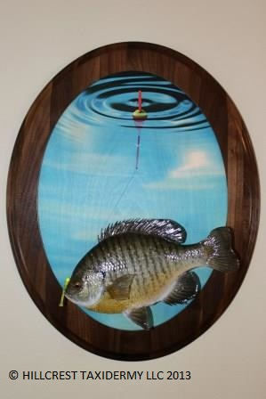 Blue gill with fishing scene